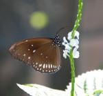 Butterfly Farm Aruba