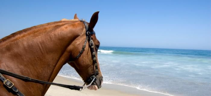 A horse on the beach watching the sea